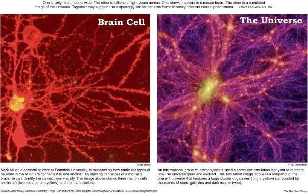 Proto-consciousness and brain cell