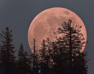 Strawberry Full Moon in Sagittarius: The Emergence of the New Direction