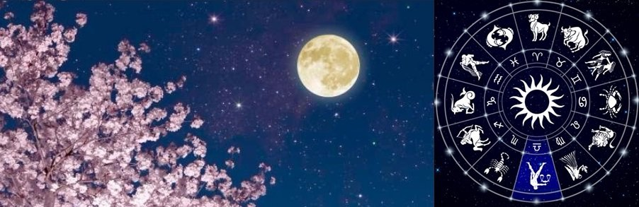 Pink Full Moon: The Interlude and Affinity